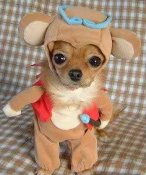 dog dressed as a deer